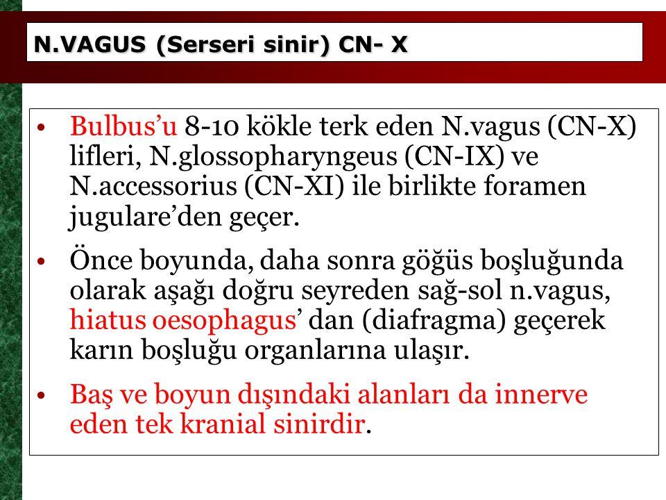 N.VAGUS (Serseri sinir) CN- X