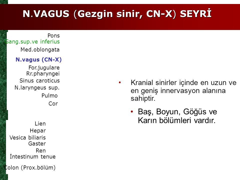 N.VAGUS (Gezgin sinir, CN-X) SEYRİ