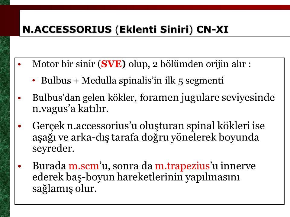 N.ACCESSORIUS (Eklenti Siniri) CN-XI