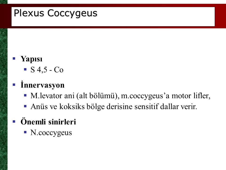 Plexus Coccygeus Yapısı S 4,5 - Co İnnervasyon