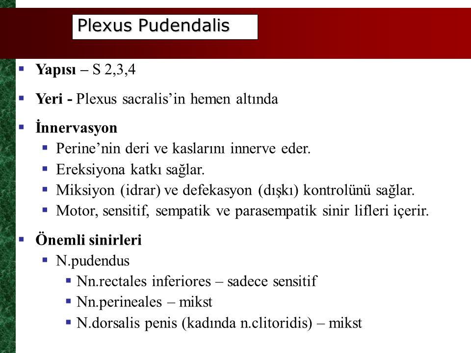 Plexus Pudendalis Yapısı – S 2,3,4