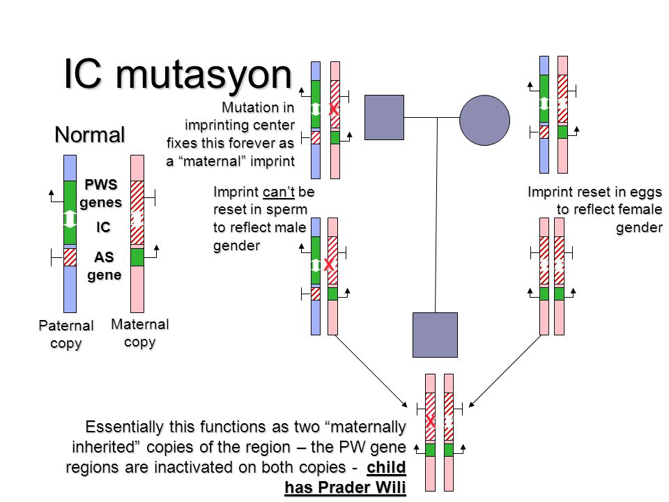 IC mutasyon X. Mutation in imprinting center fixes this forever as a maternal imprint. Normal. PWS.