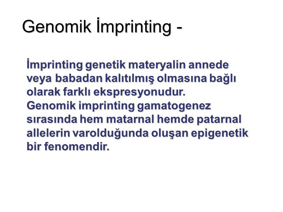 Genomik İmprinting - İmprinting genetik materyalin annede veya babadan kalıtılmış olmasına bağlı olarak farklı ekspresyonudur.