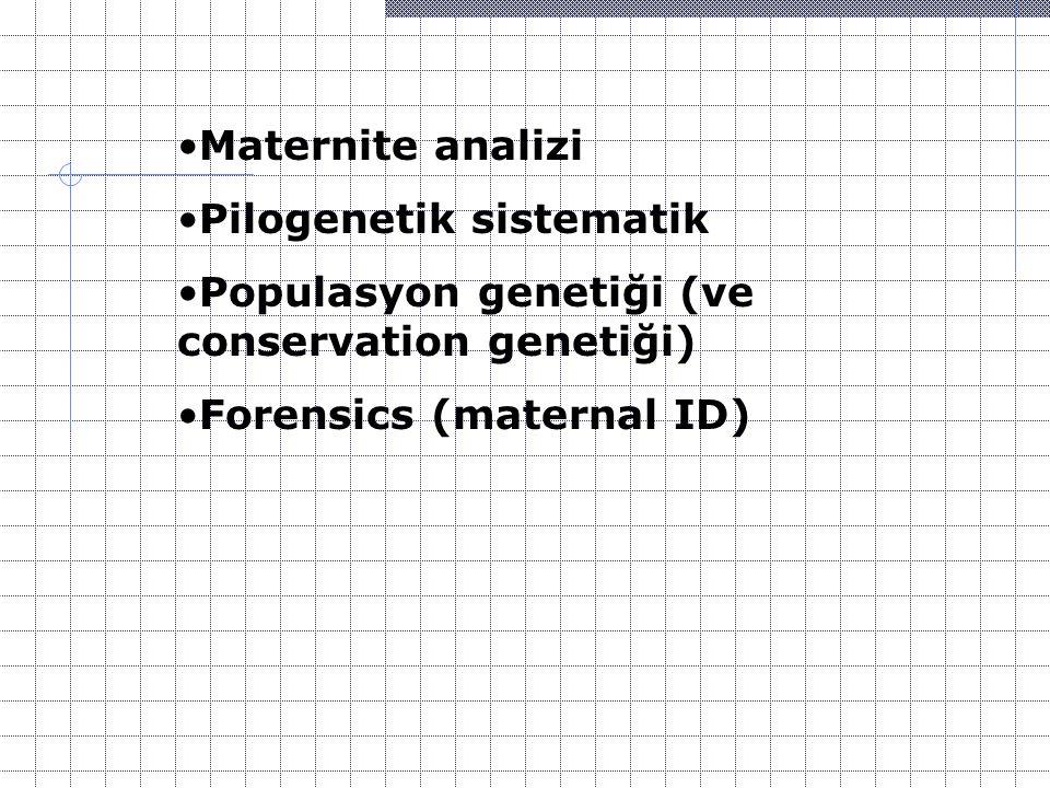 Maternite analizi Pilogenetik sistematik.