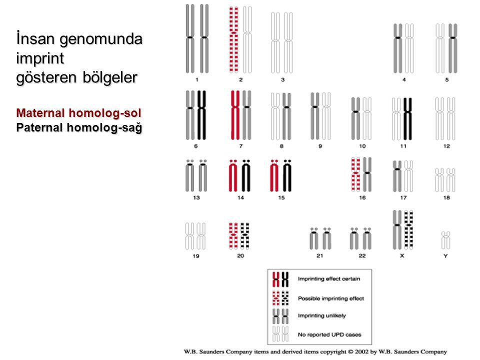 İnsan genomunda imprint gösteren bölgeler