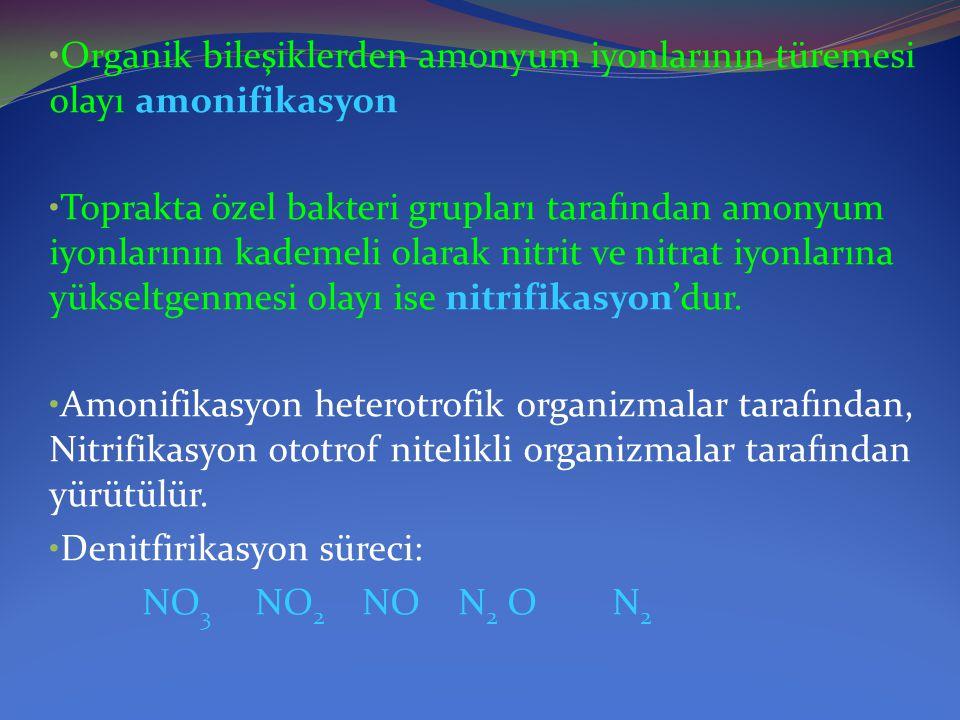 Organik bileşiklerden amonyum iyonlarının türemesi olayı amonifikasyon