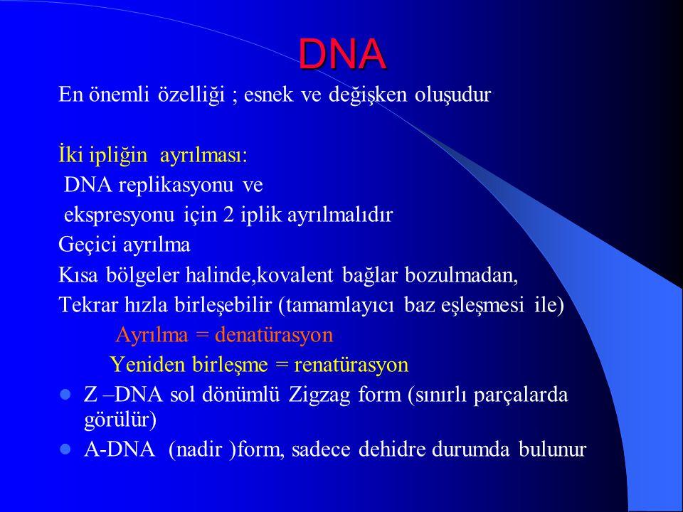 DNA En önemli özelliği ; esnek ve değişken oluşudur