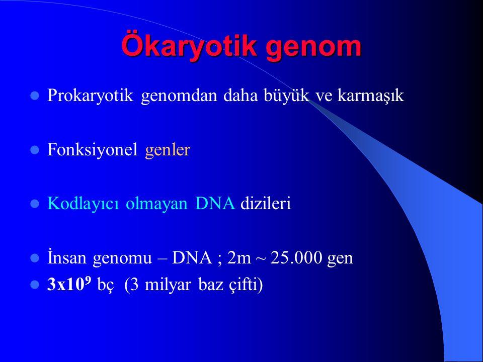 Ökaryotik genom Prokaryotik genomdan daha büyük ve karmaşık