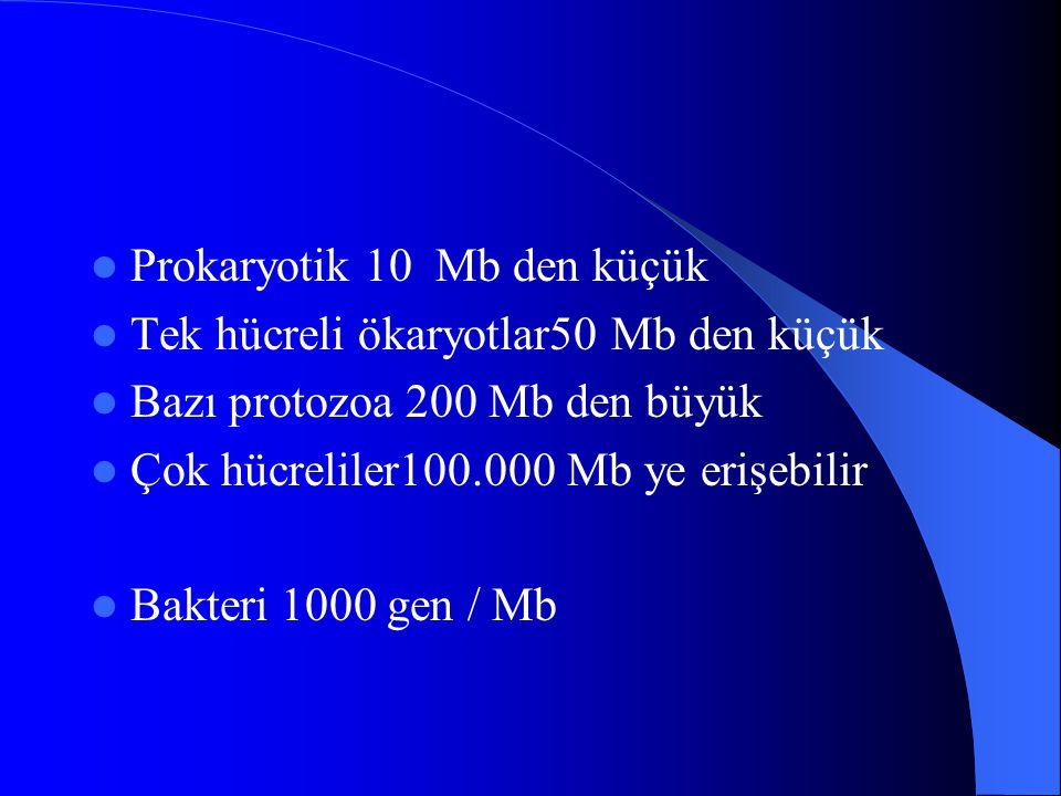 Prokaryotik 10 Mb den küçük