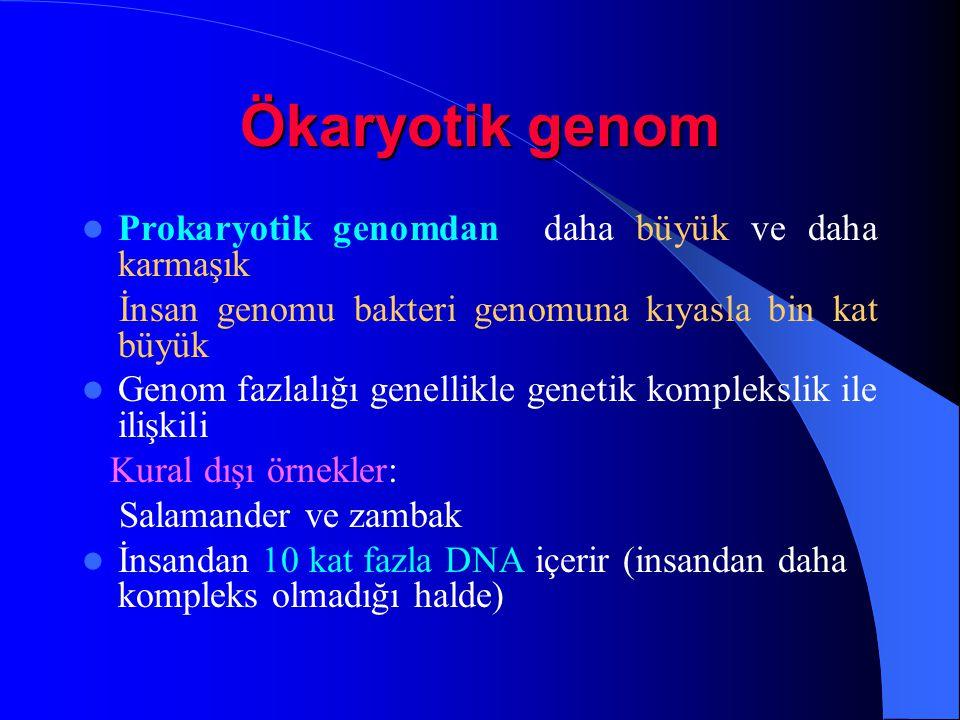 Ökaryotik genom Prokaryotik genomdan daha büyük ve daha karmaşık