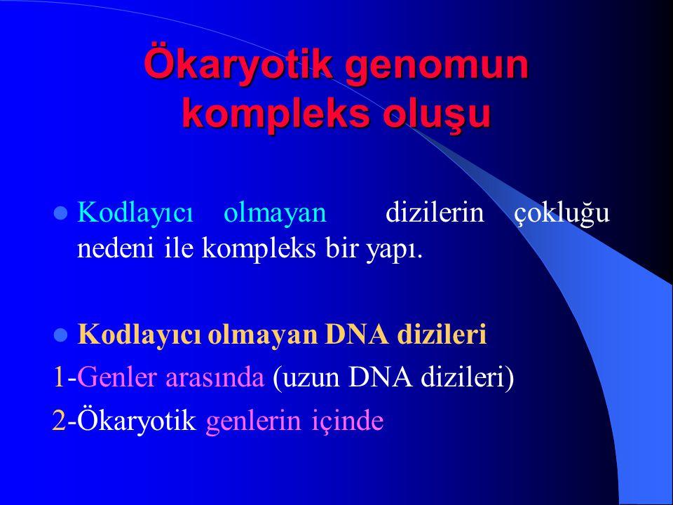 Ökaryotik genomun kompleks oluşu