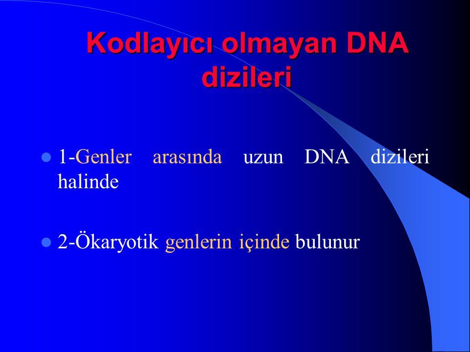 Kodlayıcı olmayan DNA dizileri