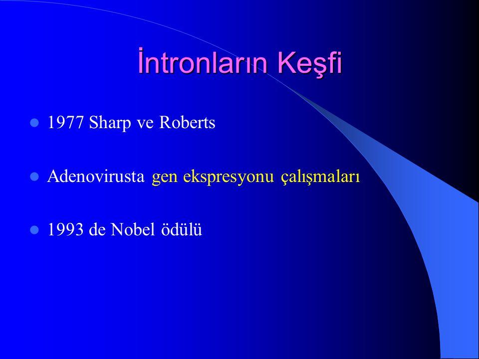 İntronların Keşfi 1977 Sharp ve Roberts