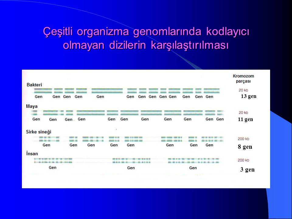 Çeşitli organizma genomlarında kodlayıcı olmayan dizilerin karşılaştırılması
