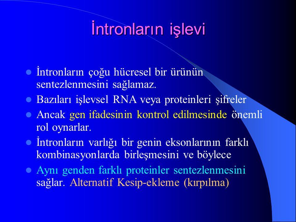 İntronların işlevi İntronların çoğu hücresel bir ürünün sentezlenmesini sağlamaz. Bazıları işlevsel RNA veya proteinleri şifreler.