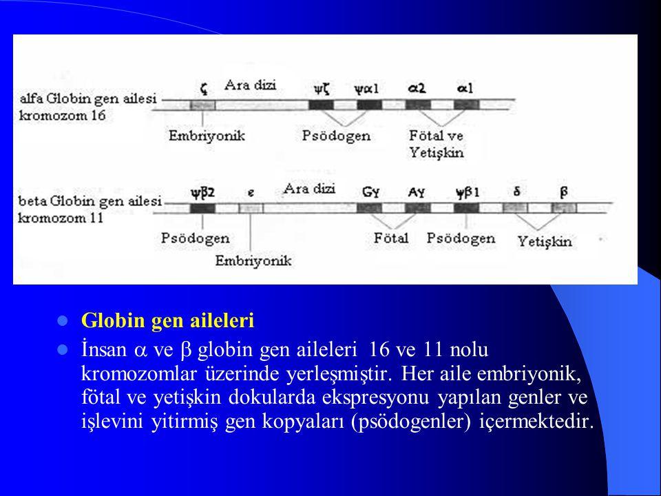Globin gen aileleri