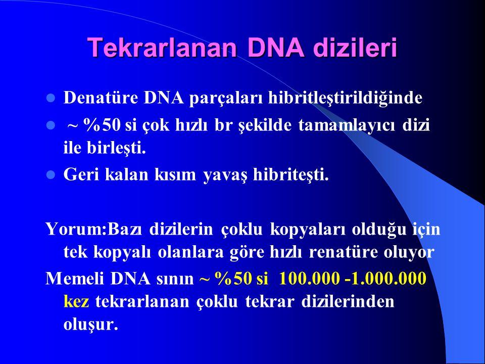 Tekrarlanan DNA dizileri