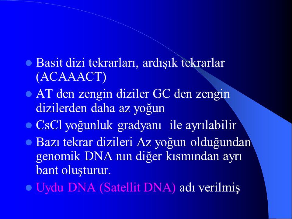 Basit dizi tekrarları, ardışık tekrarlar (ACAAACT)