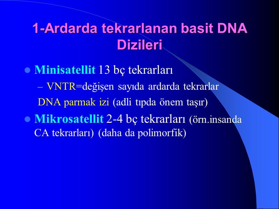 1-Ardarda tekrarlanan basit DNA Dizileri