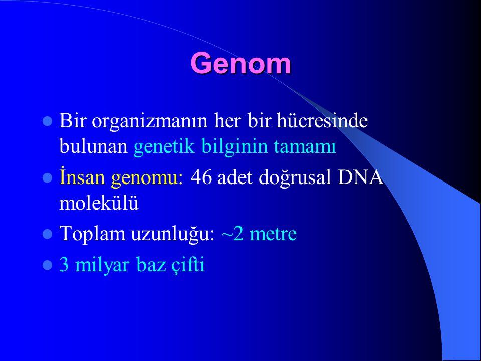 Genom Bir organizmanın her bir hücresinde bulunan genetik bilginin tamamı. İnsan genomu: 46 adet doğrusal DNA molekülü.
