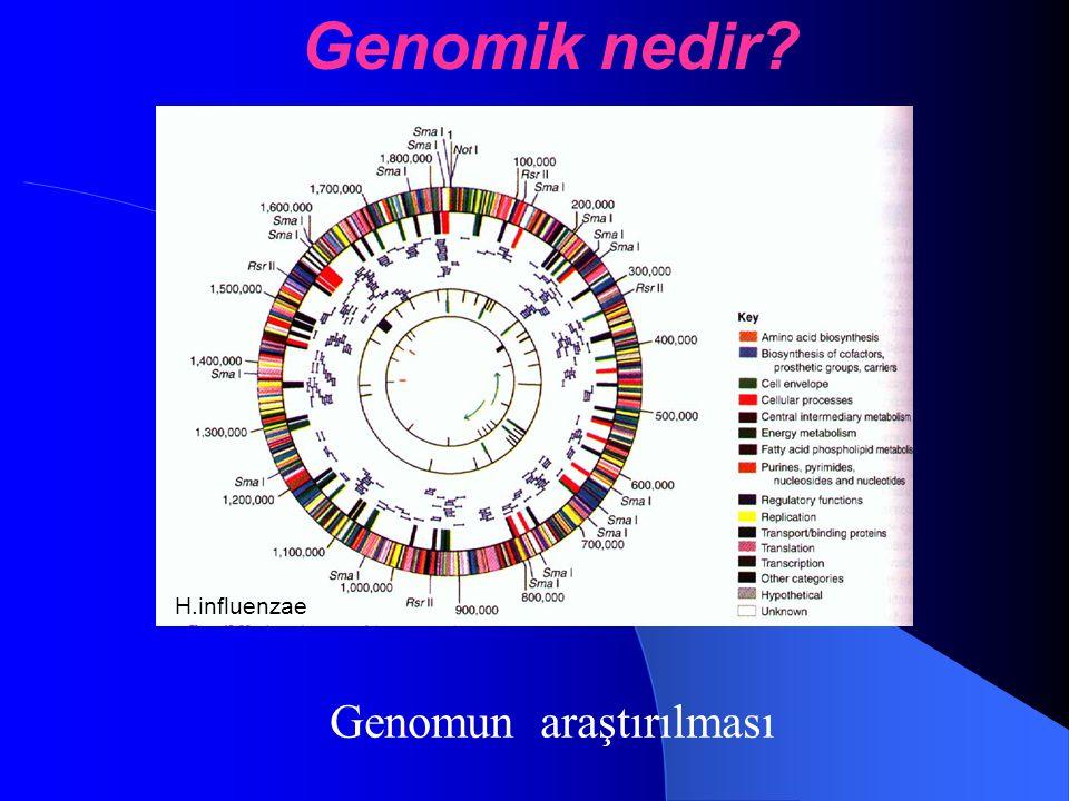 Genomun araştırılması