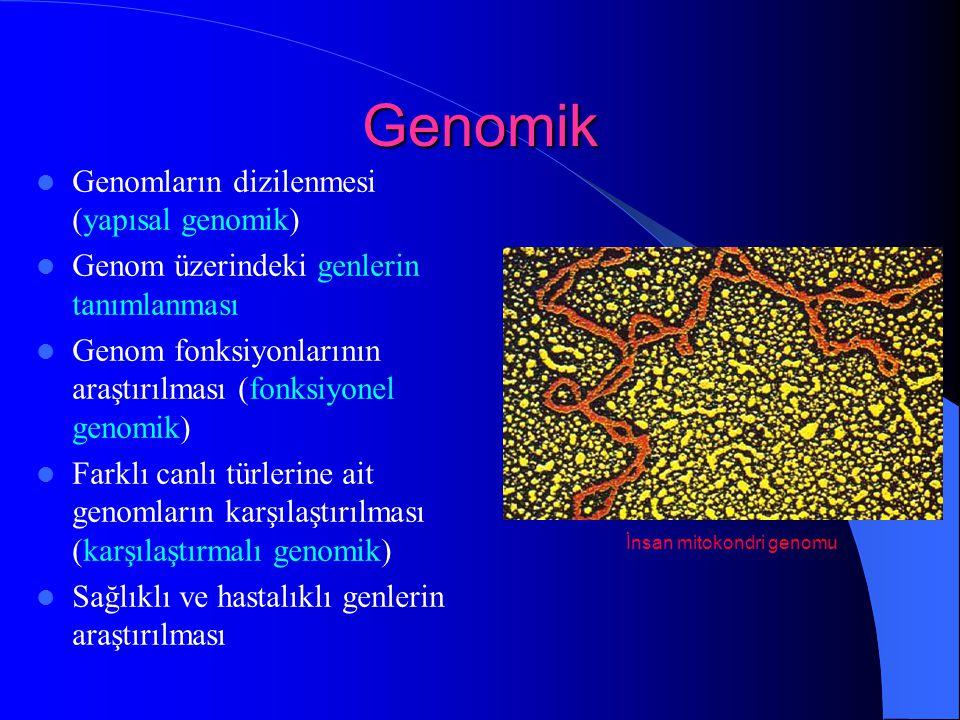 Genomik Genomların dizilenmesi (yapısal genomik)