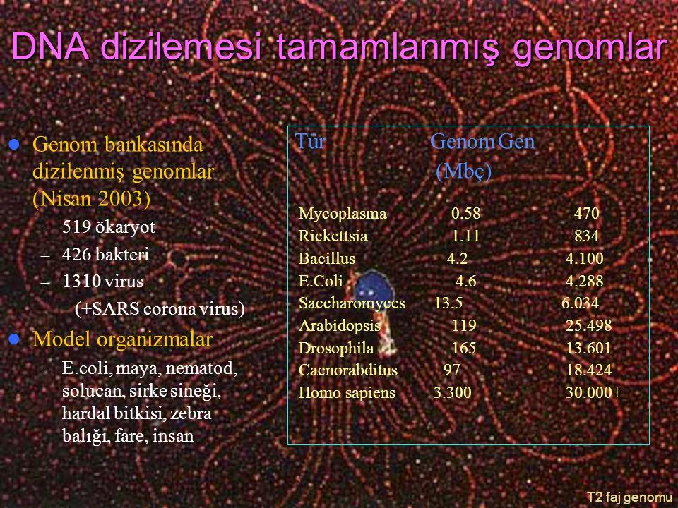 DNA dizilemesi tamamlanmış genomlar