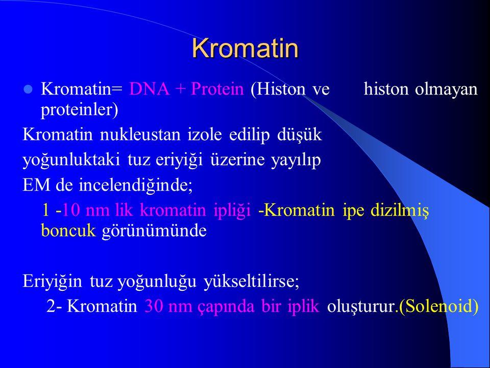 Kromatin Kromatin= DNA + Protein (Histon ve histon olmayan proteinler)