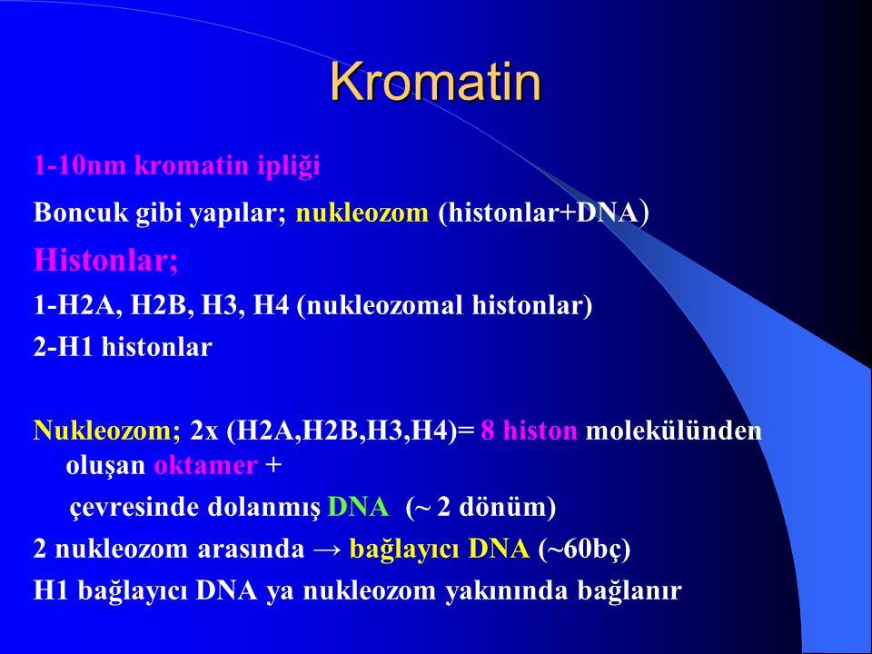 Kromatin Histonlar; 1-10nm kromatin ipliği