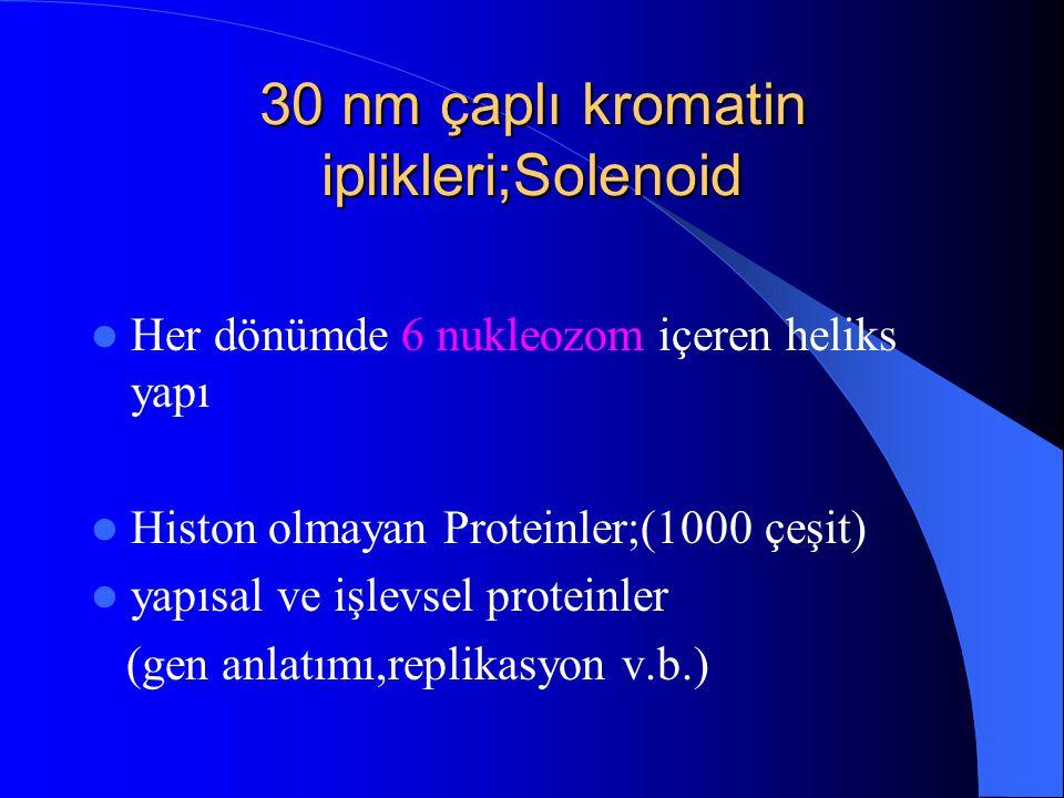 30 nm çaplı kromatin iplikleri;Solenoid
