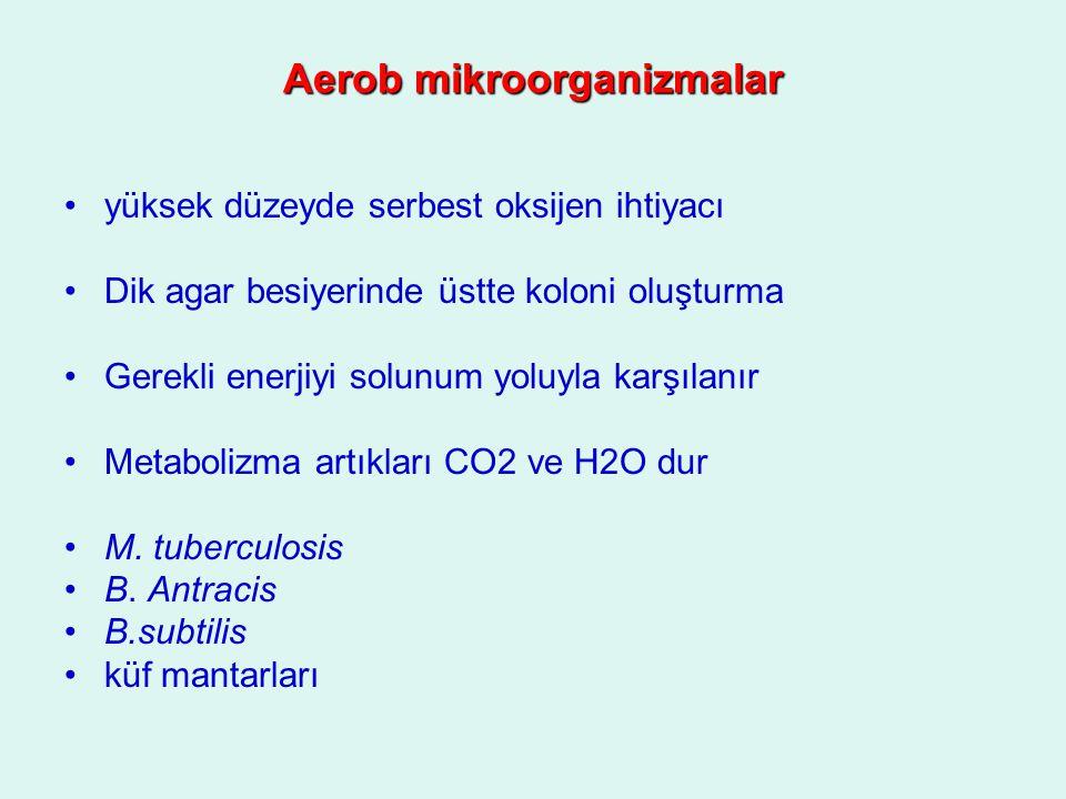 Aerob mikroorganizmalar