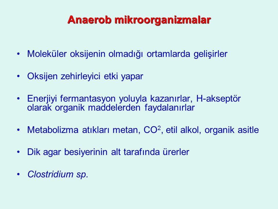 Anaerob mikroorganizmalar