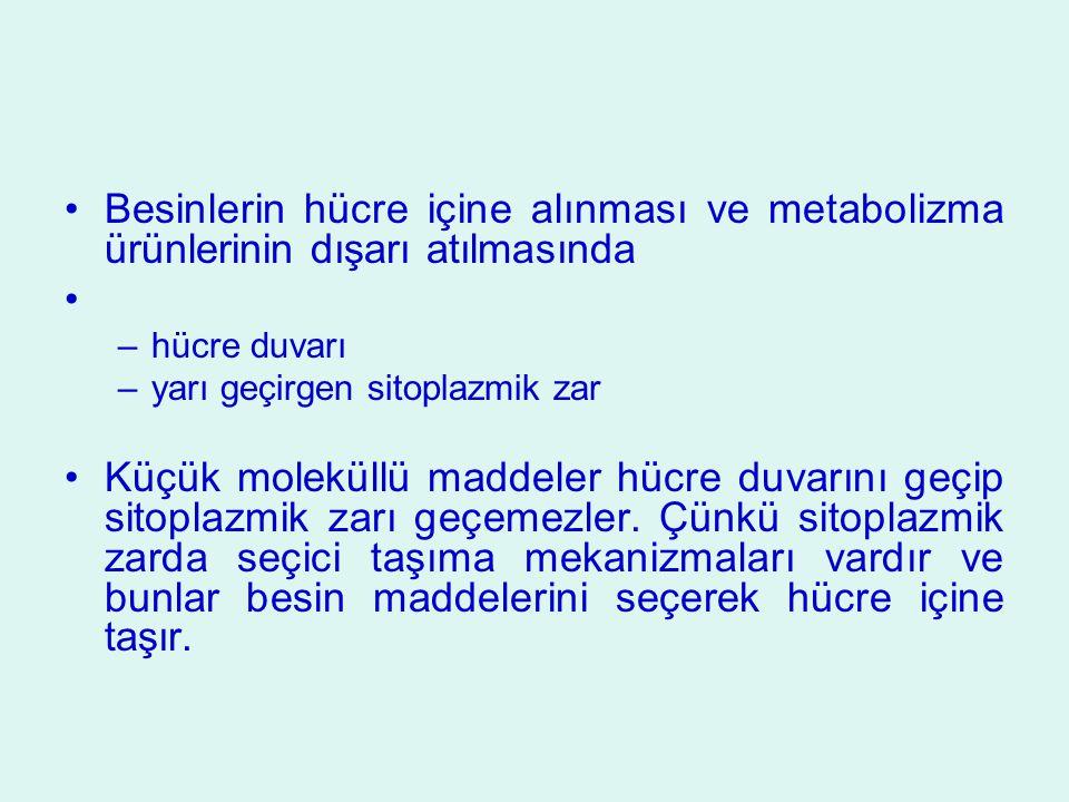 Besinlerin hücre içine alınması ve metabolizma ürünlerinin dışarı atılmasında