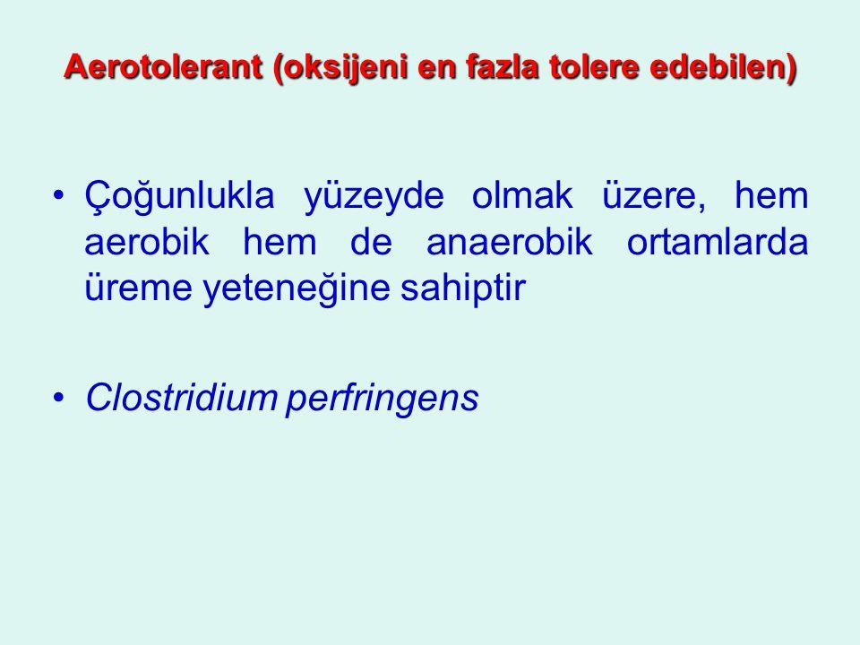 Aerotolerant (oksijeni en fazla tolere edebilen)