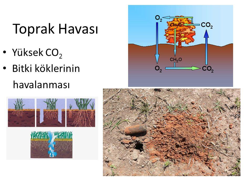 Toprak Havası Yüksek CO2 Bitki köklerinin havalanması