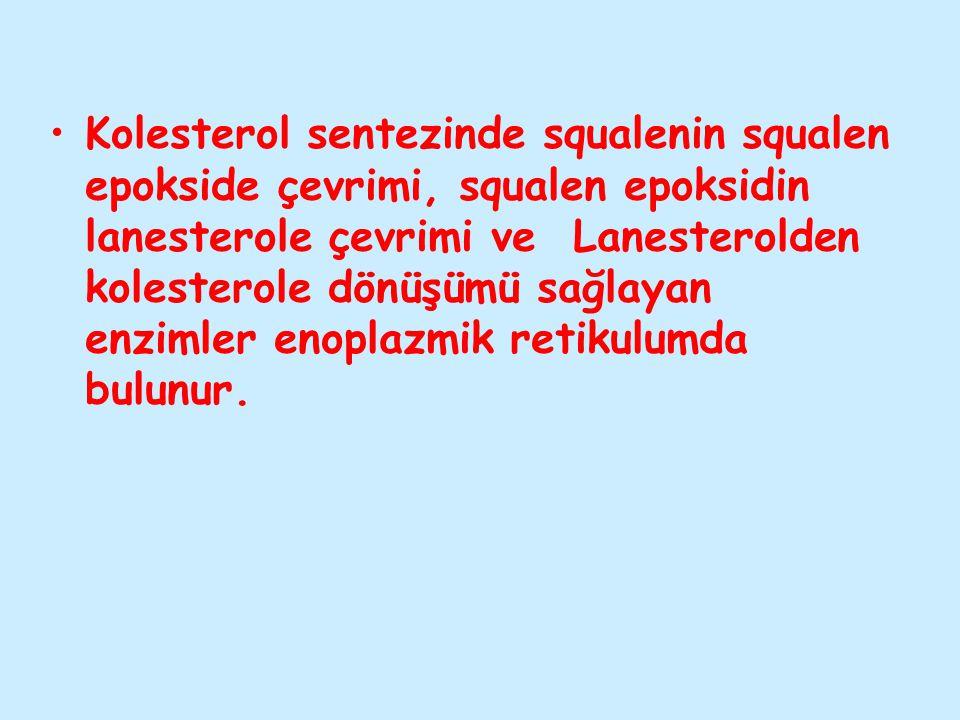 Kolesterol sentezinde squalenin squalen epokside çevrimi, squalen epoksidin lanesterole çevrimi ve Lanesterolden kolesterole dönüşümü sağlayan enzimler enoplazmik retikulumda bulunur.