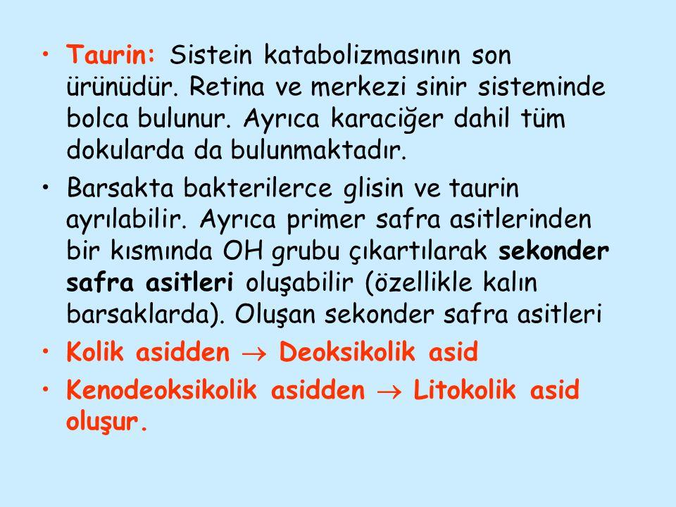 Taurin: Sistein katabolizmasının son ürünüdür