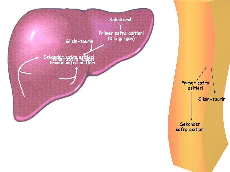 Primer safra asitleri (0.5 gr/gün)