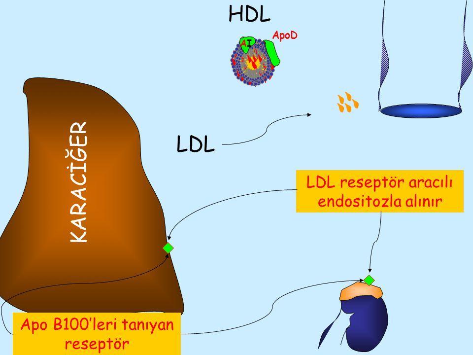 HDL LDL KARACİĞER LDL reseptör aracılı endositozla alınır