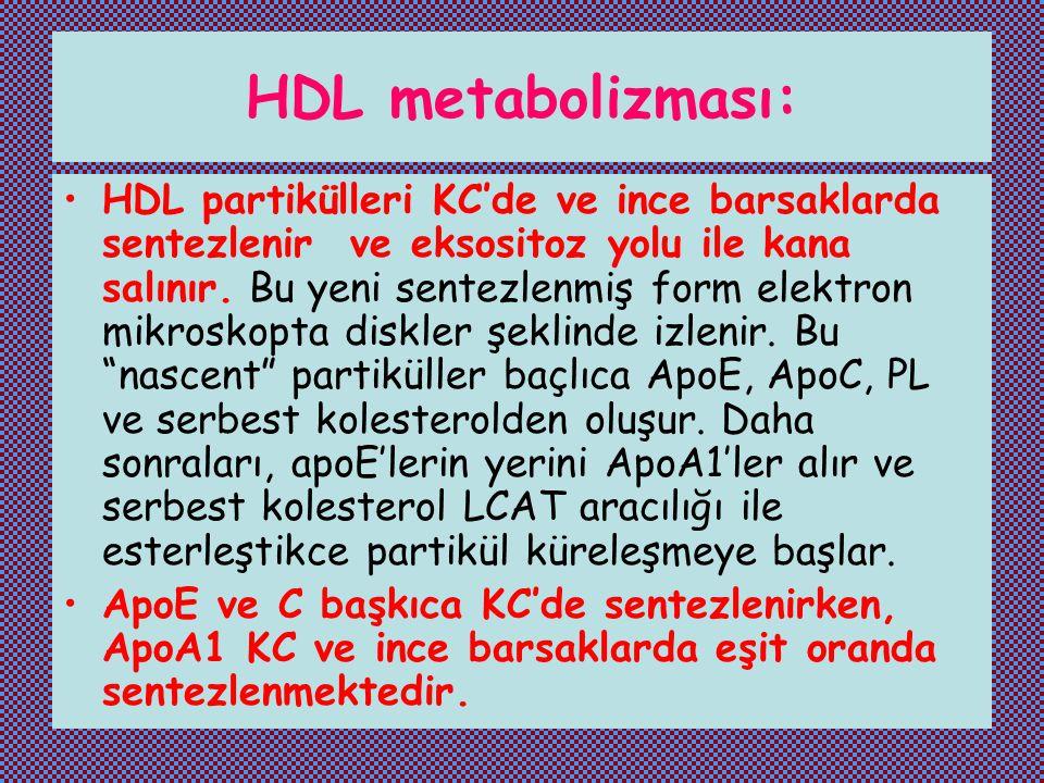 HDL metabolizması: