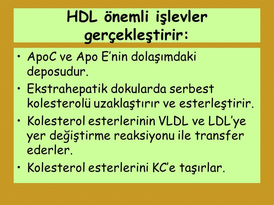 HDL önemli işlevler gerçekleştirir: