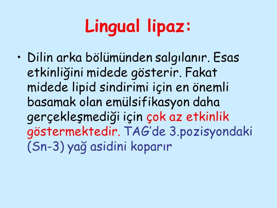 Lingual lipaz: