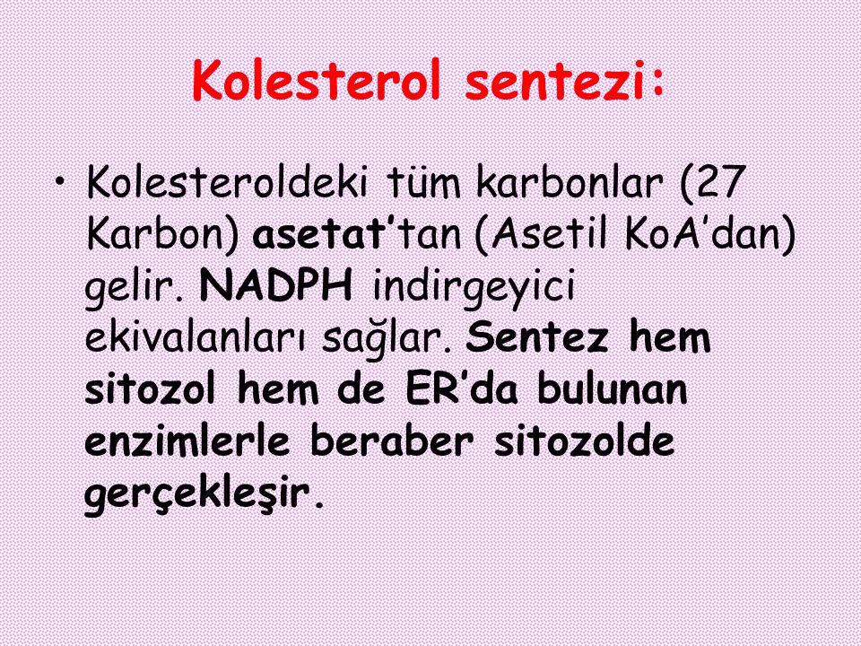 Kolesterol sentezi: