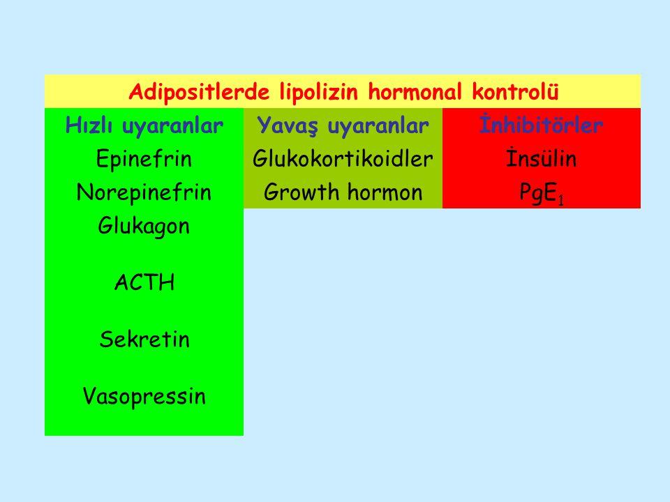 Adipositlerde lipolizin hormonal kontrolü