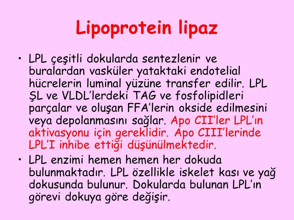 Lipoprotein lipaz