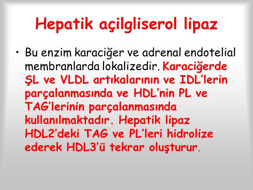 Hepatik açilgliserol lipaz