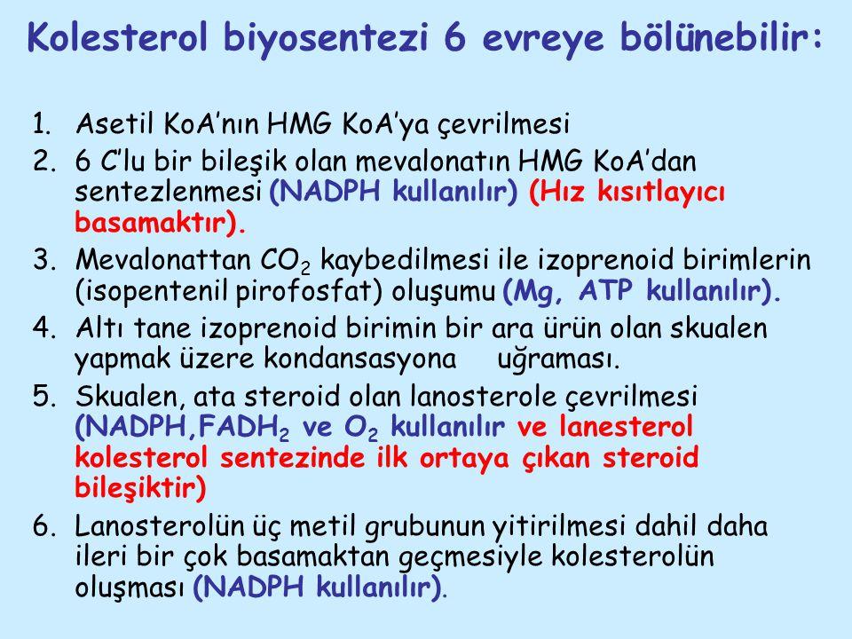 Kolesterol biyosentezi 6 evreye bölünebilir: