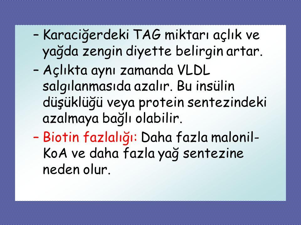 Karaciğerdeki TAG miktarı açlık ve yağda zengin diyette belirgin artar.
