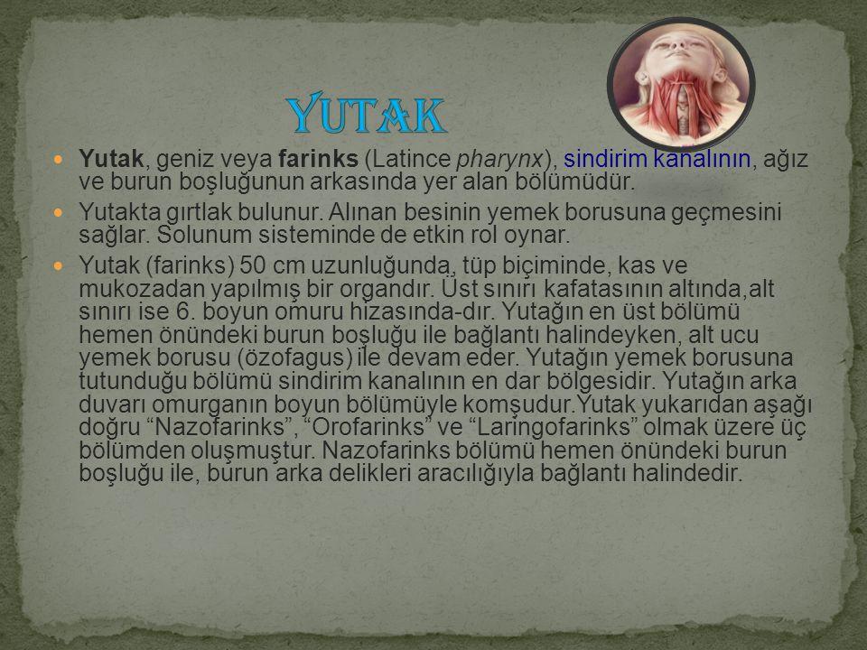 YUTAK Yutak, geniz veya farinks (Latince pharynx), sindirim kanalının, ağız ve burun boşluğunun arkasında yer alan bölümüdür.