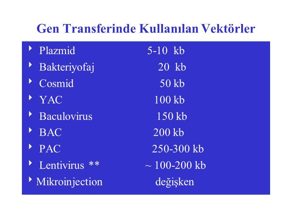 Gen Transferinde Kullanılan Vektörler